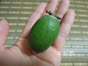 フェイジョアの果実です!